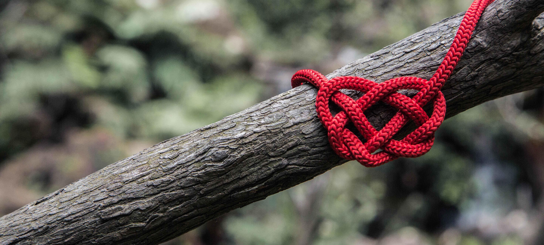 Knoten Baum Web